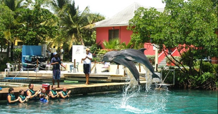 Dolphin swim adventure Tortola