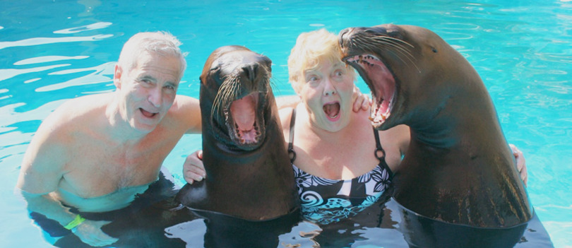 Sea Lion Encounter in Puerto Vallarta