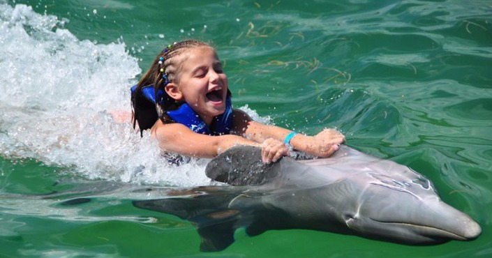 Dolphin Swim Adventure in St. Kitts