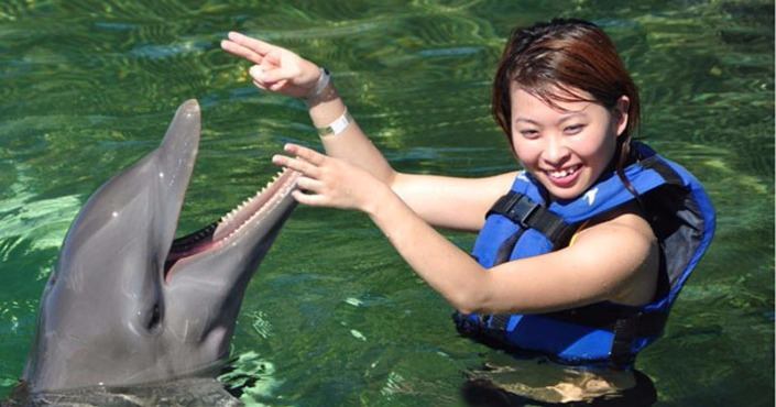 Dolphin Encounter in St. Kitts