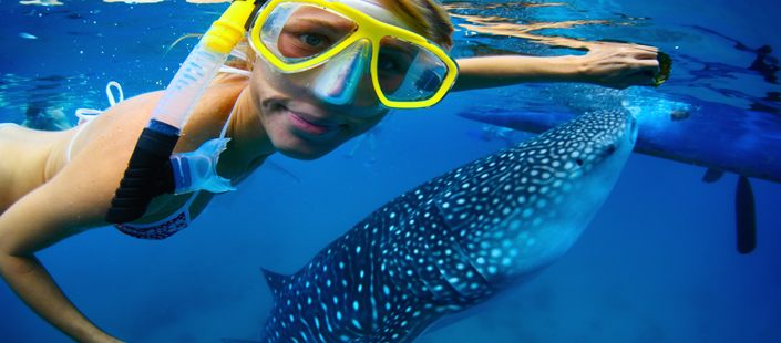 Whale Shark Encounter in Cabos