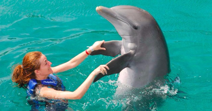 Dolphin Encounter at Six Flags