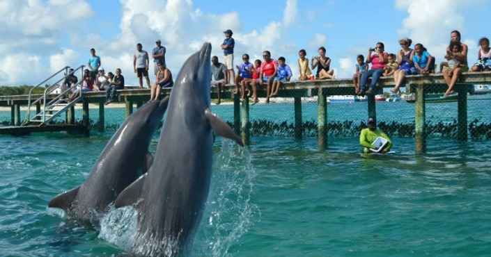 Dolphin Encounter Anguila-St Maarten