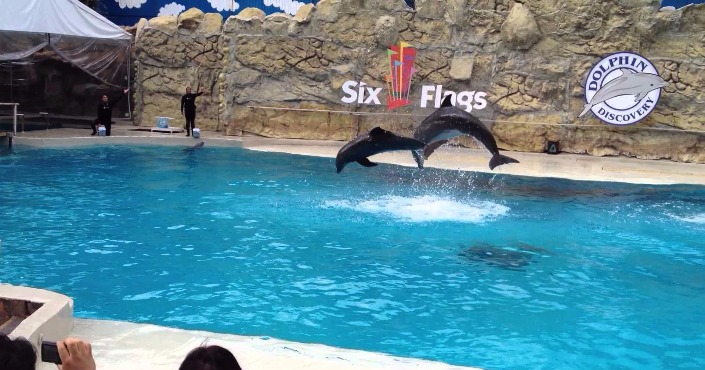 Six Flags + Nado con Delfines in Mexico City