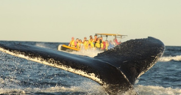 Whale watching Cabo San Lucas