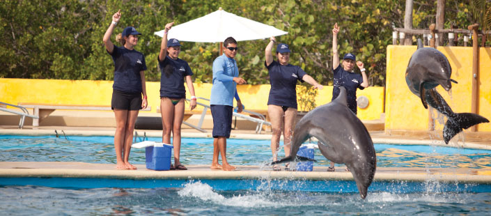 Dolphin Trainer for a Day in Puerto Vallarta
