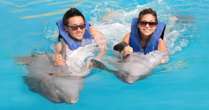 Costa Maya - Dolphin Swim Adventure