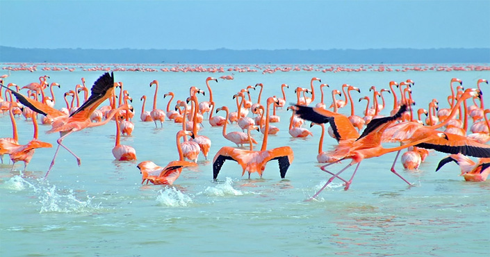 Tour Celestun Flamingos in Merida