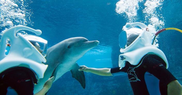 Dolphin Trek at Grand Cayman