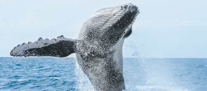 Whale Watching Photo Safari in Cabos