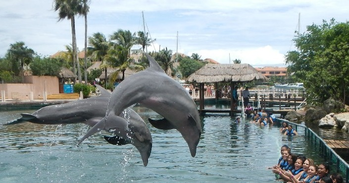 Dolphin Encounter Puerto Vallarta