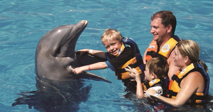 Dolphin Swim Memories in Six Flags Mexico